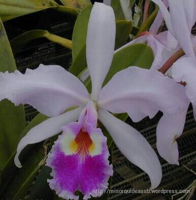 orquideas partes y formas de sus flores parte 6 mis orquideas s b